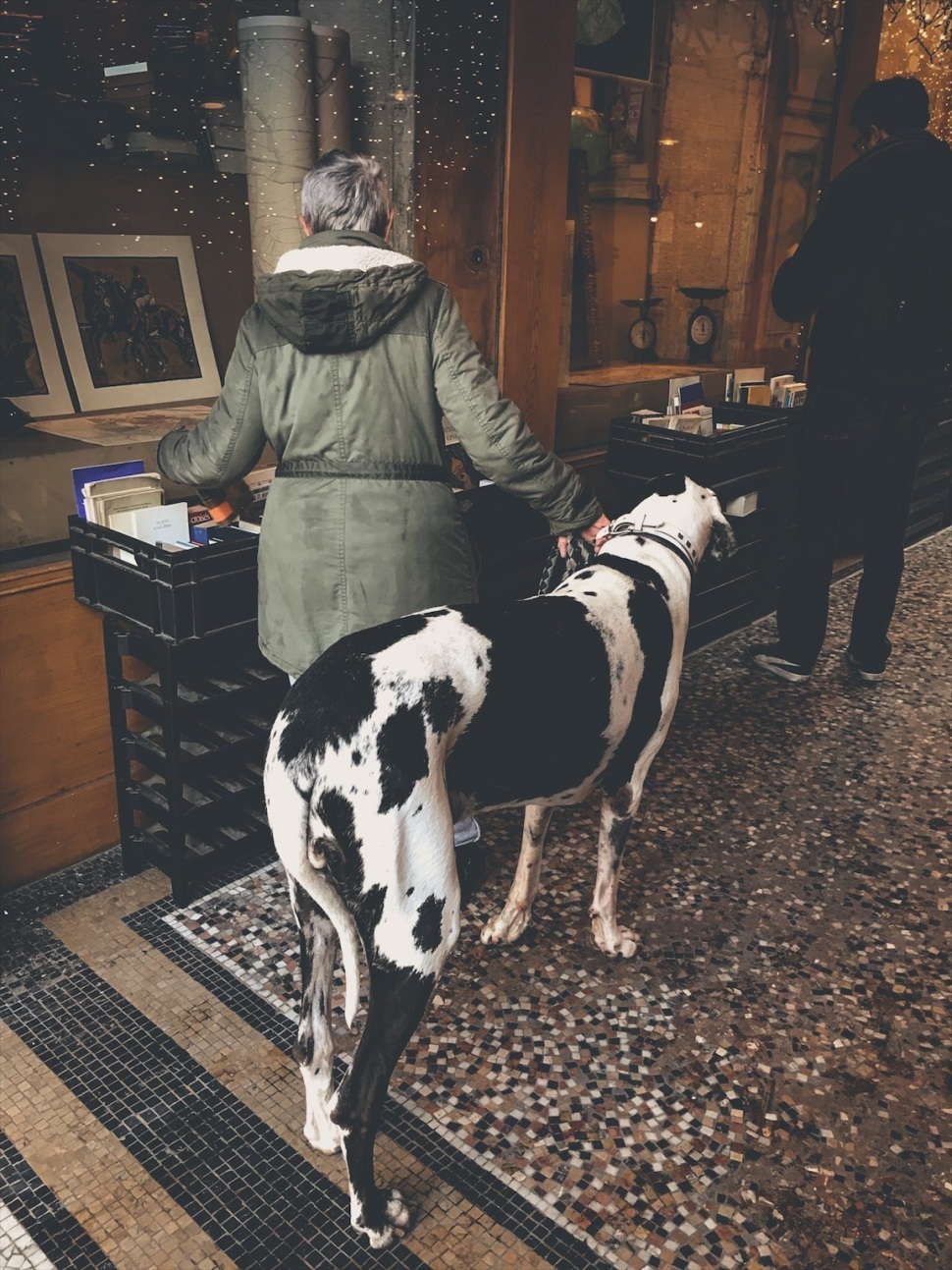 Large dog in Paris