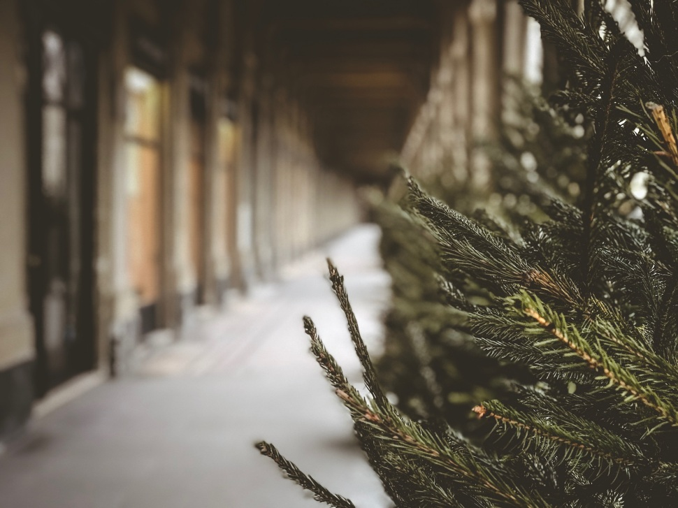 Christmas tree at Palais Royal, Paris France